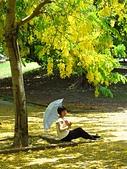 2016.05.29 麟洛公園-阿勃勒:IMG_5089.JPG