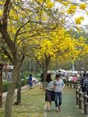 2017.03.18 廍子公園:IMG_1584.JPG