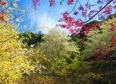 2018.03.03 萬里山園-櫻花:IMG_1151_1.jpg