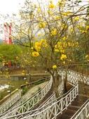 2017.04.01 竹崎公園:IMG_2215.JPG