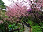 2013.02.14 紫微森林:IMG_0029.JPG