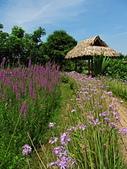 2014.07.05 觀音-寞內的花園:IMG_6521.JPG