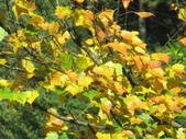 紅楓谷:IMG_7726.JPG