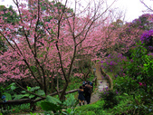 2013.02.14 紫微森林:IMG_0030.JPG