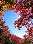 2016.12.25 稍來山紅榨槭:IMG_2564.jpg