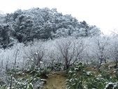 2016.01.24 三峽熊空賞雪:IMG_5949.JPG
