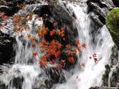 紅楓谷:IMG_7806.JPG