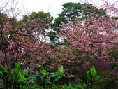 2013.02.14 紫微森林:IMG_0041.JPG