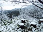 2016.01.24 三峽熊空賞雪:IMG_5988.JPG