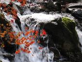 紅楓谷:IMG_7810.JPG