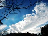 2013.02.14 紫微森林:IMG_0055.JPG