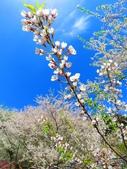 2018.03.03 萬里山園-櫻花:IMG_1817.JPG
