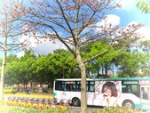 2018.03.31 大湖紀念公園-紫藤:IMG_2502.JPG