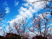 2013.02.14 紫微森林:IMG_0062.JPG