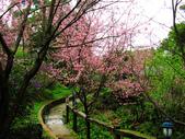 2013.02.14 紫微森林:IMG_9932.JPG