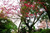2013.02.14 紫微森林:IMG_9939.JPG