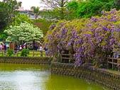 2018.03.31 大湖紀念公園-紫藤:IMG_2703.JPG