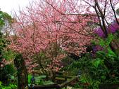 2013.02.14 紫微森林:IMG_9940.JPG
