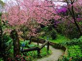 2013.02.14 紫微森林:IMG_9945.JPG