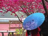 20200222三義櫻花渡假村~八甲茶園:ice_2020-02-22-19-29-29-192.jpg
