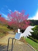 20200122翠墨莊園賞櫻花:ice_2020-01-22-23-50-18-636.jpg