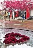 20200222三義櫻花渡假村~八甲茶園:ice_2020-02-22-19-19-44-233.jpg