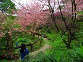 2013.02.14 紫微森林:IMG_9948.JPG