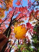 2016.12.25 稍來山紅榨槭:IMG_2314.jpg