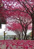 20200222三義櫻花渡假村~八甲茶園:ice_2020-02-22-19-35-42-792.jpg