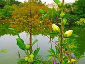 2018.09.07 台灣地景公園&大溪韭菜:IMG_0353.JPG