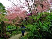 2013.02.14 紫微森林:IMG_9949.JPG