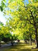 2016.05.29 麟洛公園-阿勃勒:IMG_4325.JPG