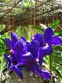 2014.07.05 觀音-寞內的花園:IMG_6484.JPG