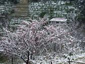 2016.01.24 三峽熊空賞雪:IMG_5966.JPG