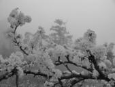 2011李花與雲海的邂逅:IMG_1254.JPG