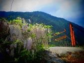 2018.04.04  環山部落-紫藤:IMG_6325.JPG