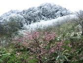 2016.01.24 三峽熊空賞雪:IMG_6069.JPG