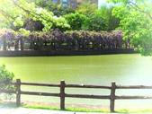 2018.03.31 大湖紀念公園-紫藤:IMG_2933.JPG