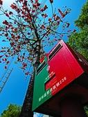 2018.03.31 大湖紀念公園-紫藤:IMG_3195.JPG