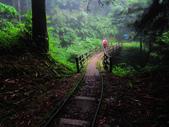 塔塔加雲海.東埔山.特富野古道:IMG_4393.JPG