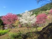 2018.03.03 萬里山園-櫻花:IMG_0688.JPG
