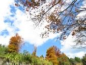 2016.12.17 清境落羽松:IMG_0925.jpg