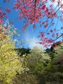 2018.03.03 萬里山園-櫻花:IMG_1154_1.jpg