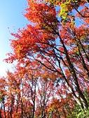 2016.12.25 稍來山紅榨槭:IMG_2286.jpg