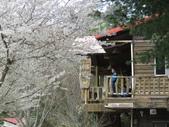 2018.03.04 司馬庫斯 -櫻花:31.JPG