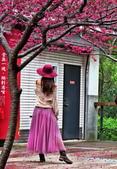 20200222三義櫻花渡假村~八甲茶園:ice_2020-02-22-19-21-28-194.jpg
