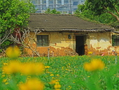 20200222三義櫻花渡假村~八甲茶園:ice_2020-02-22-18-51-16-107.jpg