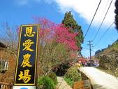 20200215恩愛農場富士櫻:ice_2020-02-16-07-13-39-793.jpg