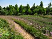 2014.07.05 觀音-寞內的花園:IMG_6502.JPG
