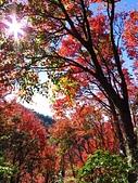2016.12.25 稍來山紅榨槭:IMG_2270.jpg